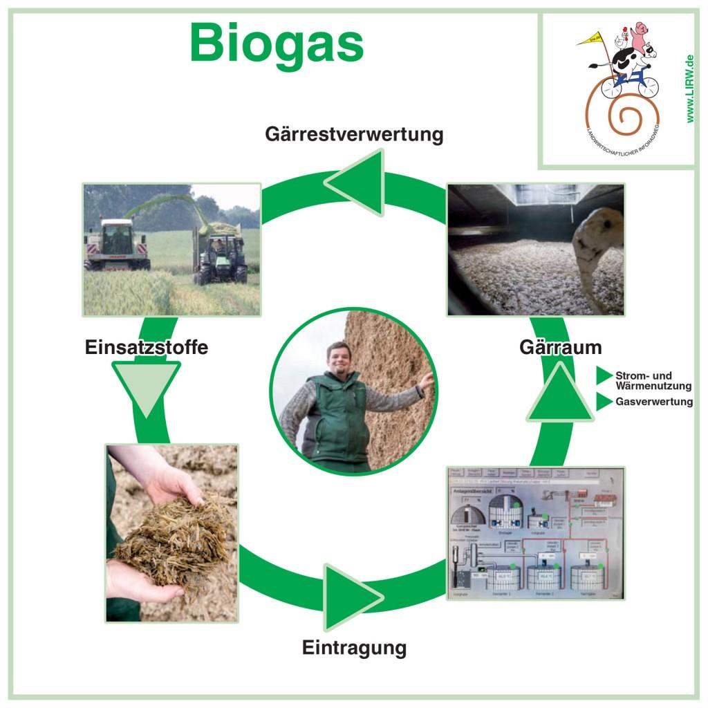 LIRW-Biogas-Schweinemast