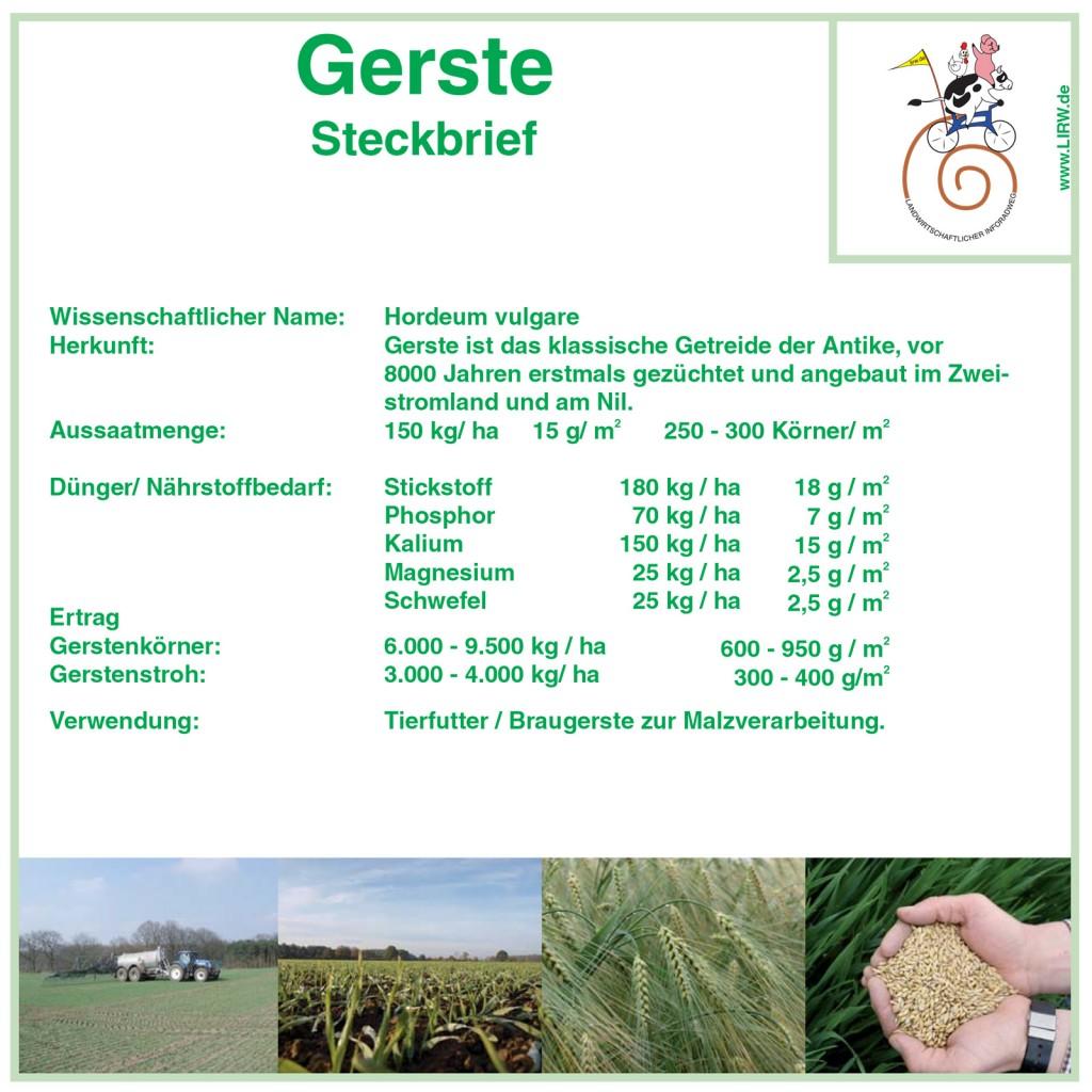 LIRW-Gerste
