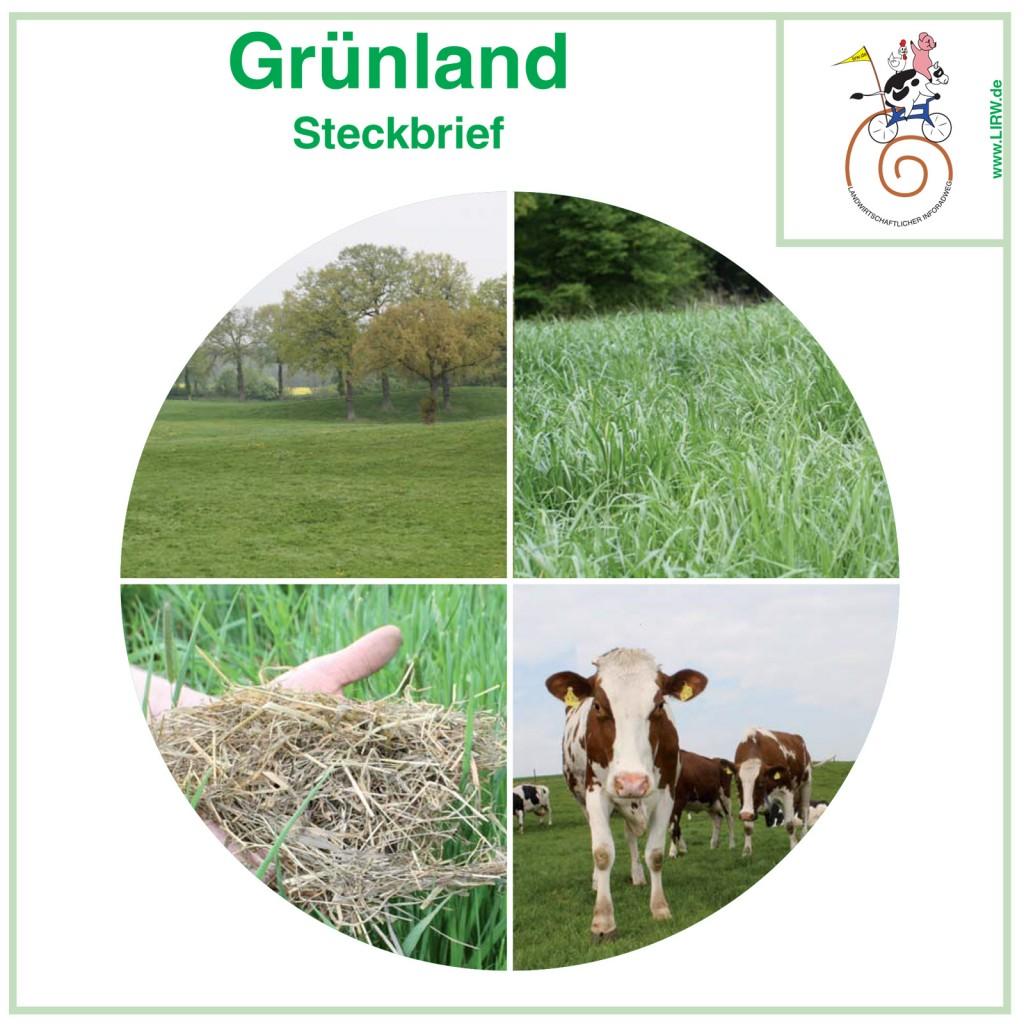 LIRW-Gruenland